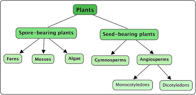 Plant-Classification
