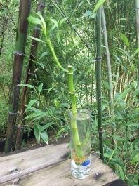 Bamboo Farm Near Me